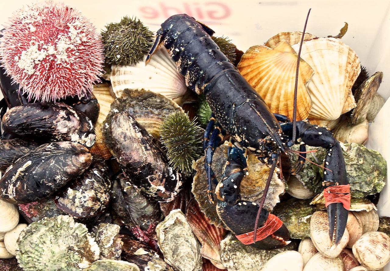 Scallops, oyster, lobster, sea urchin, mussels Bergen Cuisine